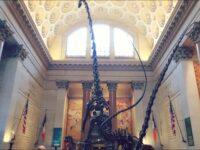 アメリカ自然史博物館♡入場料,所要時間は?ナイトミュージアムで有名!